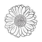 Gerbera chamomile icon. Vector line style Stock Photo