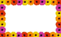 Gerbera frame Royalty Free Stock Photo