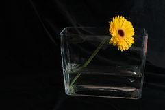 Gerbera, with compliments. View of a lonely yellow gerbera in a funky vase on black background Stock Images
