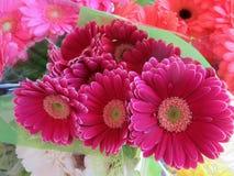 Gerbera cor-de-rosa atrativo bonito Daisy Flowers Bouquet imagem de stock
