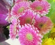 Gerbera cor-de-rosa consideravelmente brilhante & atrativo Daisy Flower Bouquet fotografia de stock royalty free