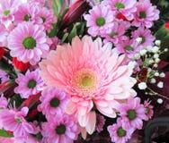 Gerbera cor-de-rosa consideravelmente brilhante & atrativo Daisy Flower Bouquet imagem de stock royalty free