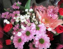 Gerbera cor-de-rosa consideravelmente brilhante & atrativo Daisy Flower Bouquet foto de stock royalty free