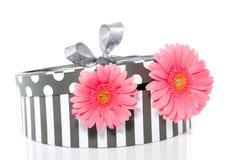 Gerbera cor-de-rosa em um giftbox Imagens de Stock Royalty Free