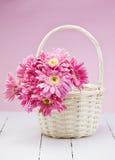 Gerbera cor-de-rosa na cesta com fundo cor-de-rosa Foto de Stock