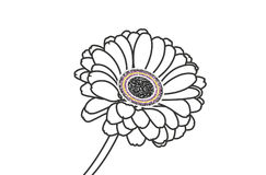 Gerbera da flor Imagem de Stock Royalty Free