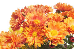 Gerbera daisies Stock Photo