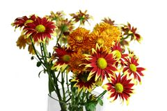 Gerbera Daisies. Red and yellow bouquet of Gerbera daisies Royalty Free Stock Photography