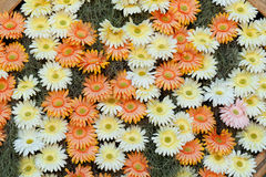 Gerbera Daisies arranged Royalty Free Stock Photo