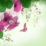 Gerbera daisies and butterfly Stock Photography