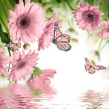 Gerbera daisies and butterfly Stock Images