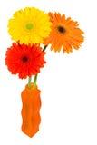 Gerbera Daisies in a orange vase Stock Image