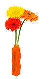 Gerbera Daisies in a orange vase Royalty Free Stock Photos