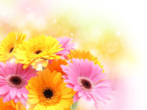 Gerbera daisies on pastel sparkly background Royalty Free Stock Photography