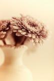 Gerbera Daisies in a Vase Stock Image
