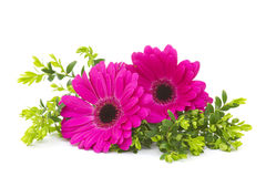 Gerbera daisies Royalty Free Stock Photography