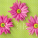 Gerbera daisies and the word spring. The text spring written on a blurred image of some pink gerbera daisies on a green background Stock Image