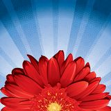 Gerbera Daisy stock illustration