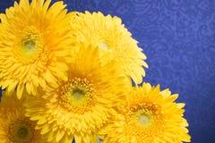 Gerbera Daisy Royalty-vrije Stock Afbeeldingen