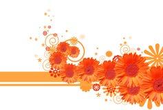 Gerbera daisy background Stock Image