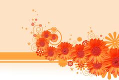 Gerbera daisy background Royalty Free Stock Image