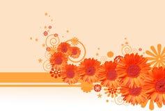 Gerbera Daisy Background Royalty Free Stock Image