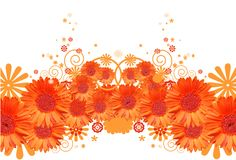 Gerbera daisy background Royalty Free Stock Photo