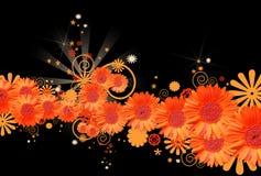 Gerbera daisy background Royalty Free Stock Photography