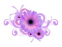 Gerbera daisy background Royalty Free Stock Images