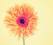 Gerbera daisy on a beige background toned with a retro vintage i Royalty Free Stock Image