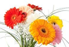 Gerbera daisy bouquet Stock Image