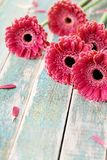 Gerbera daisy bouquet for mother or womans day. Beautiful flower background. Vintage style. royalty free stock photos