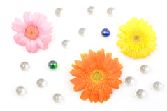 Gerbera daisy flower arrangements Royalty Free Stock Images