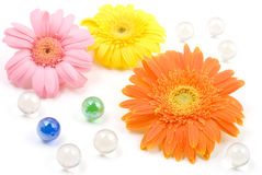 Gerbera daisy flower arrangements Stock Photo