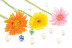 Gerbera daisy flower arrangements Stock Images