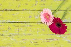 Gerbera daisy flower greeting card background for mothers or womans day at vintage style. stock photo