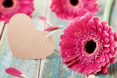 Gerbera daisy flowers with greeting note in shape of heart for womans or mother day on wooden vintage background. stock photography