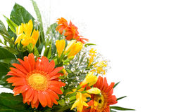 Gerbera daisy and freesia Stock Photos