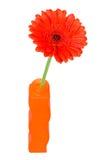 Gerbera Daisy in a orange vase Stock Images