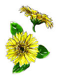 Gerbera Daisy yellow flower Stock Photo