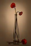 Gerbera dans un vase en verre (rétro style) II Photo stock