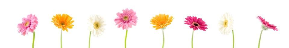 gerbera de bouquet Images stock