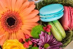 Gerbera de fleur et plan rapproché de macaron Image libre de droits