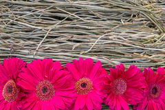 Gerbera decoration Royalty Free Stock Images
