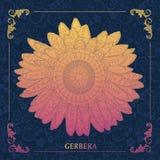 Gerbera, dekoracyjny Obraz Royalty Free