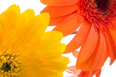 Gerbera Delight. Wonderful spring yellows and orange Stock Images
