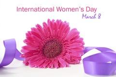 Gerbera do rosa do dia das mulheres internacionais Fotografia de Stock
