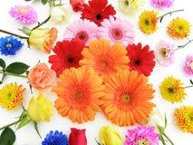 Gerbera en andere bloemen Stock Afbeelding