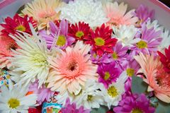 Gerbera en andere kleurrijke die bloemen als natuurlijke achtergrondafbeelding met witte, gele, rode en roze bloesems wordt gesch stock afbeelding