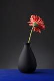 Gerbera en florero Imagen de archivo